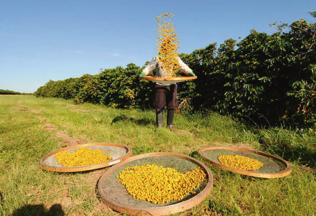 From Rio to Sao Paulo, Hopes are High in Brazil for an Abundant Harvest