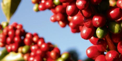 November 2019 Green Coffee Report